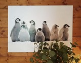 pingouins-4-72628